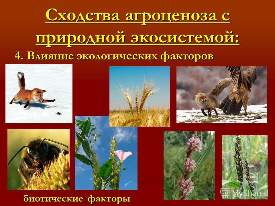 Сходства агроценоза с природной экосистемой: 4. Влияние экологических факторов биотические факторы