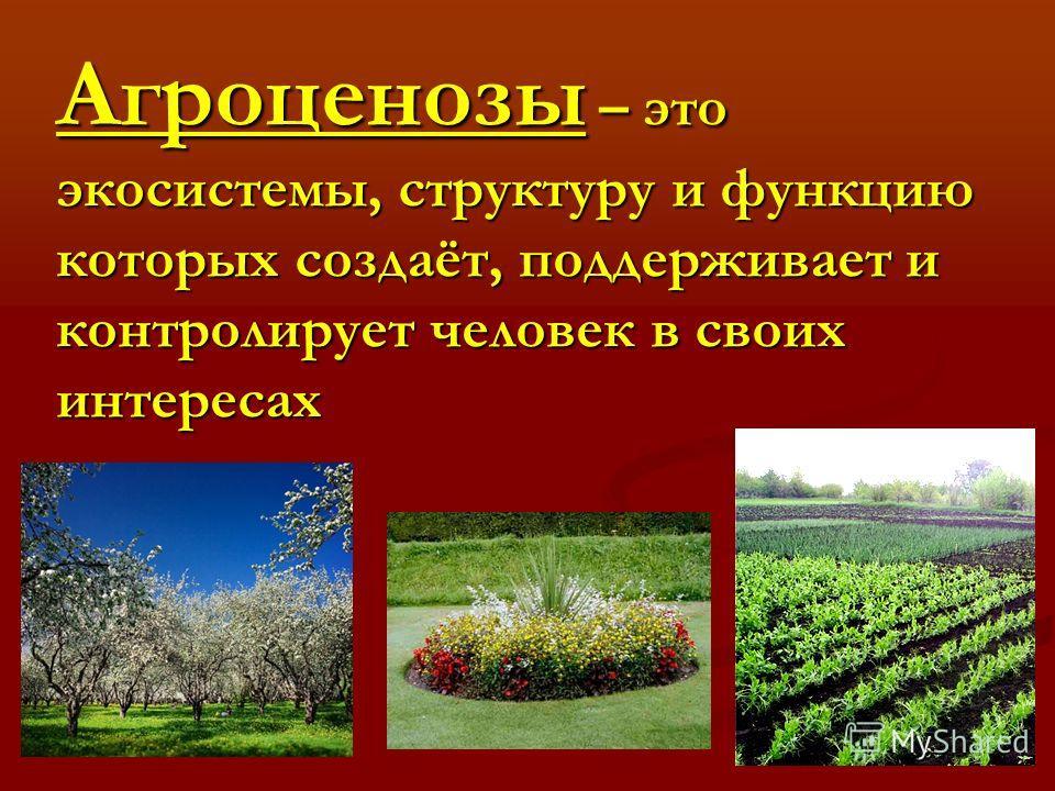 Агроценозы – это экосистемы, структуру и функцию которых создаёт, поддерживает и контролирует человек в своих интересах