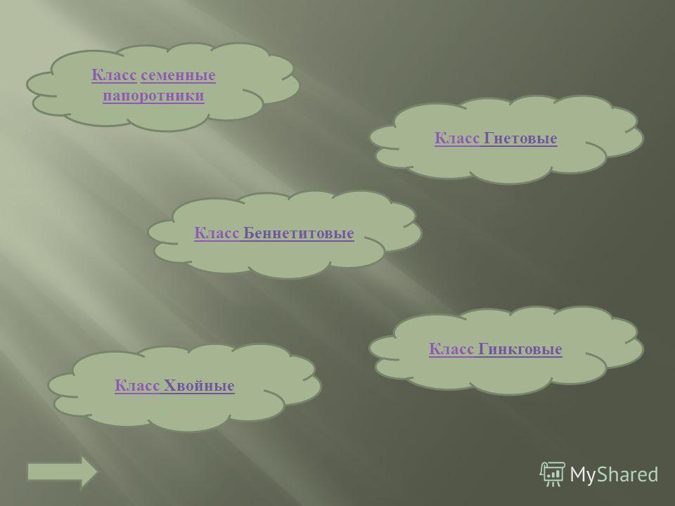Порядок сосновые Род кедр Вид сосна обыкновенная Семейство сосновые Род сосна Род ель Род пихта Род лиственница