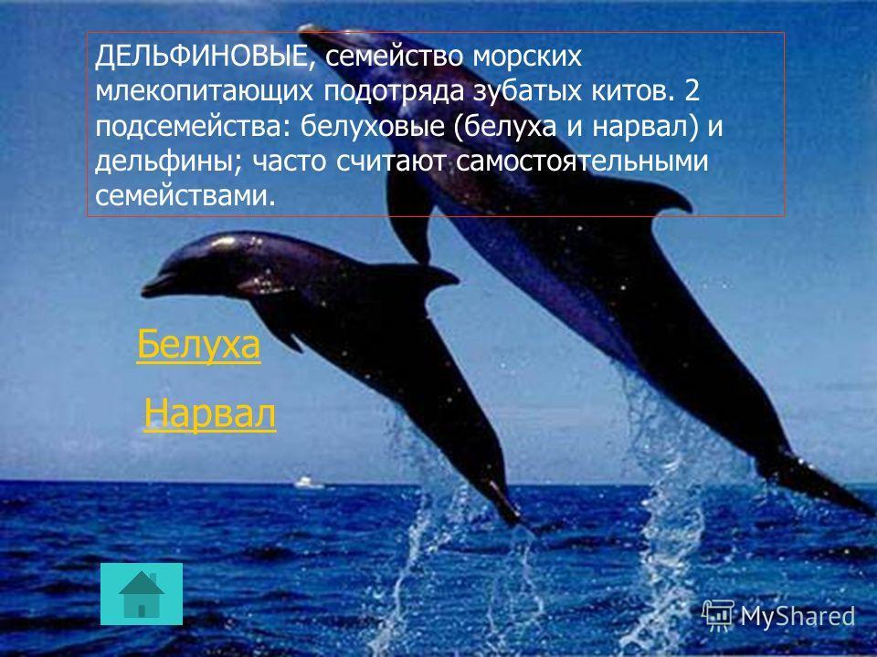 . Гидродинамическое совершенство форм тела, строение кожного покрова, гидроупругий эффект плавников, способность нырять на значительную глубину, надежность эхолокатора и другие особенности дельфинов представляют интерес для бионики. 1 вид в Красной к