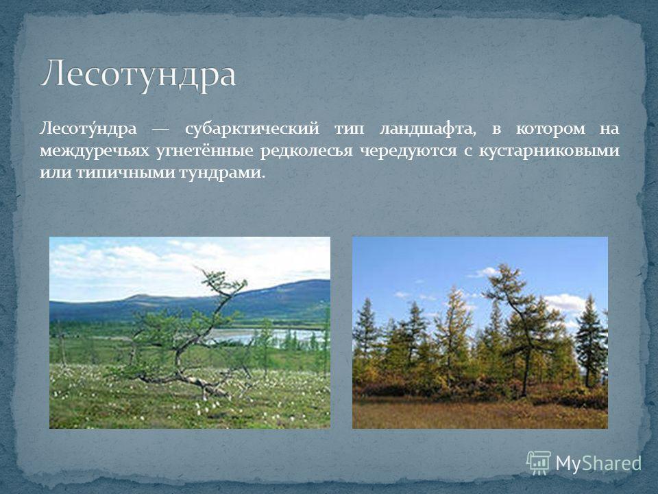 Лесоту́ндра субарктический тип ландшафта, в котором на междуречьях угнетённые редколесья чередуются с кустарниковыми или типичными тундрами.