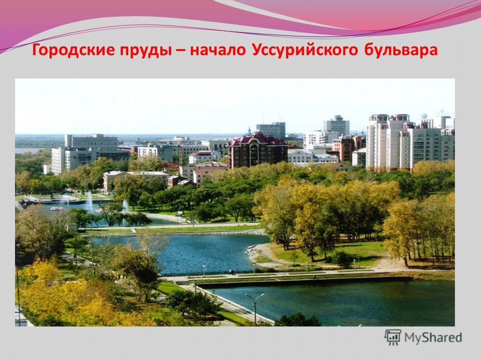 Городские пруды – начало Уссурийского бульвара