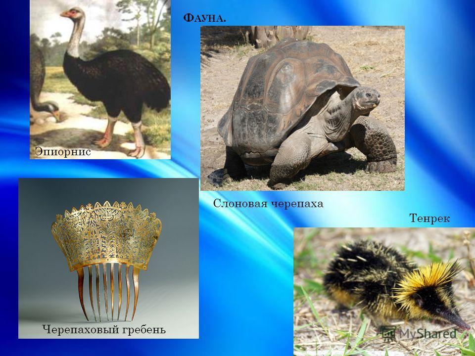 Ф АУНА. Черепаховый гребень Эпиорнис Слоновая черепаха Тенрек