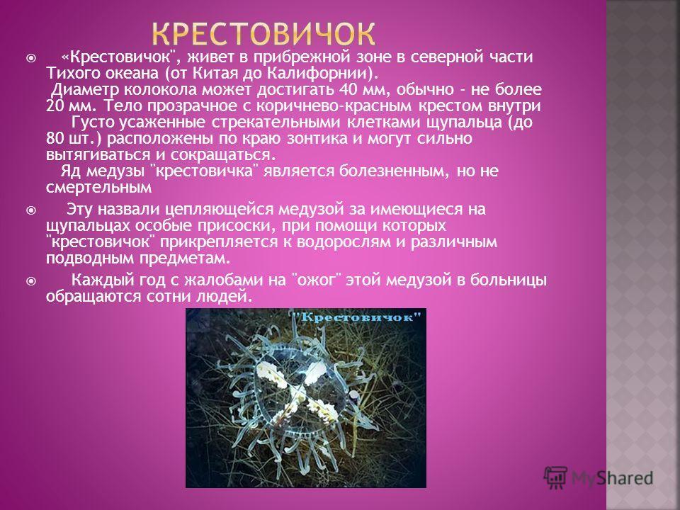 Медузы ируканджи небольшие - их размер не превышает 15-20 мм в диаметре зонтика. Выглядит эта медуза, как крохотный прозрачный колокол с 4 длинными (до 35 см) щупальцами. Ируканджи можно у берегов Австралии Первое подробное описание этой медузы дал д