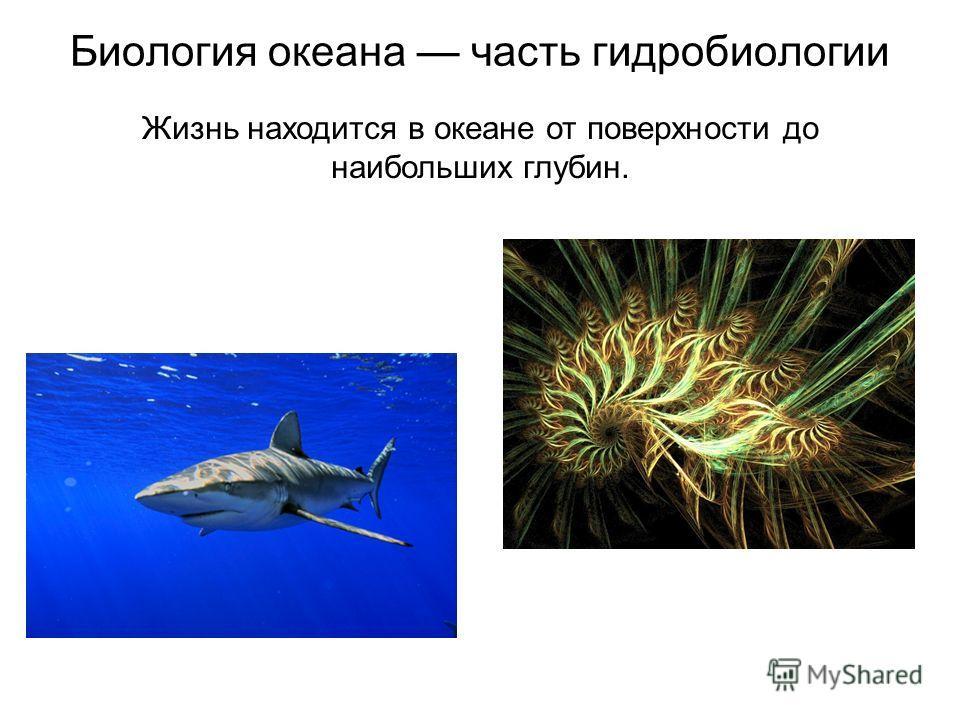 Биология океана часть гидробиологии Жизнь находится в океане от поверхности до наибольших глубин.