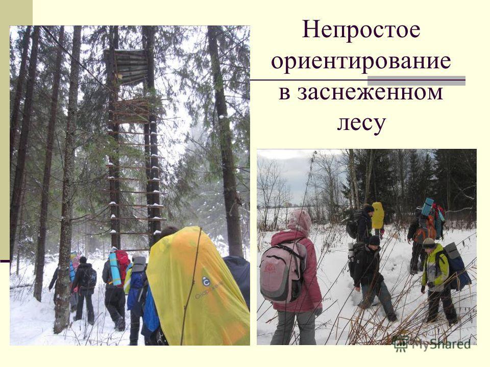 Непростое ориентирование в заснеженном лесу