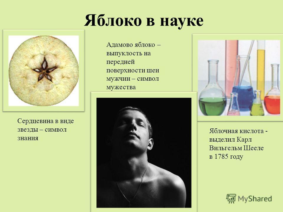 Сердцевина в виде звезды – символ знания Адамово яблоко – выпуклость на передней поверхности шеи мужчин – символ мужества Яблочная кислота - выделил Карл Вильгельм Шееле в 1785 году