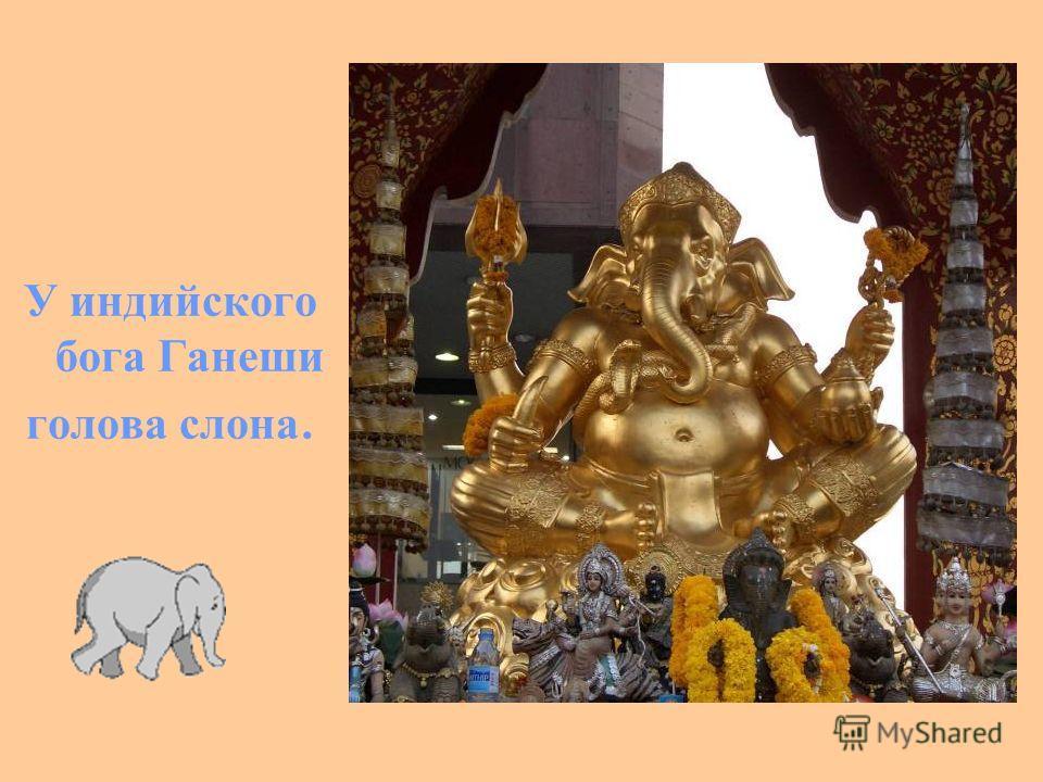 У индийского бога Ганеши голова слона.