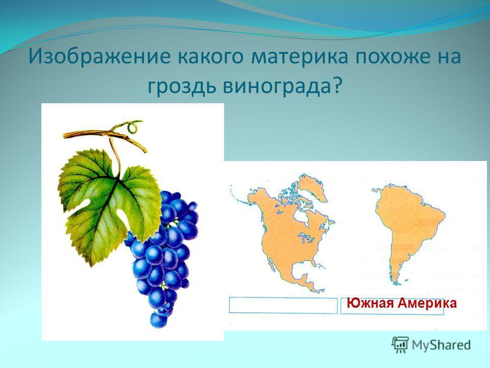 Изображение какого материка похоже на гроздь винограда? Южная Америка