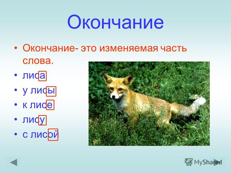 Окончание Окончание- это изменяемая часть слова. лиса у лисы к лисе лису с лисой
