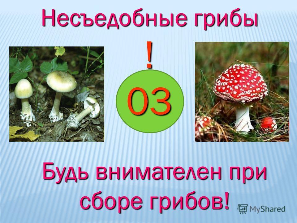 03 ! Будь внимателен при сборе грибов! Несъедобные грибы