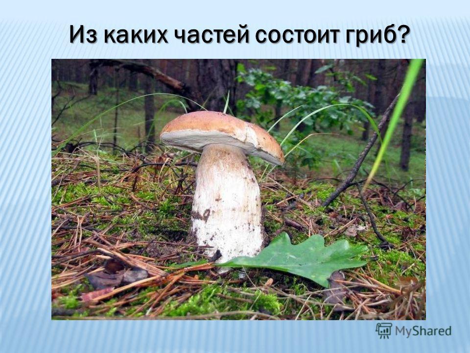 Из каких частей состоит гриб?