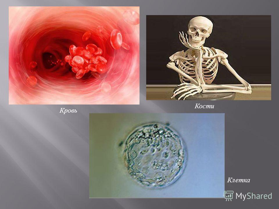 Кровь Кости Клетка