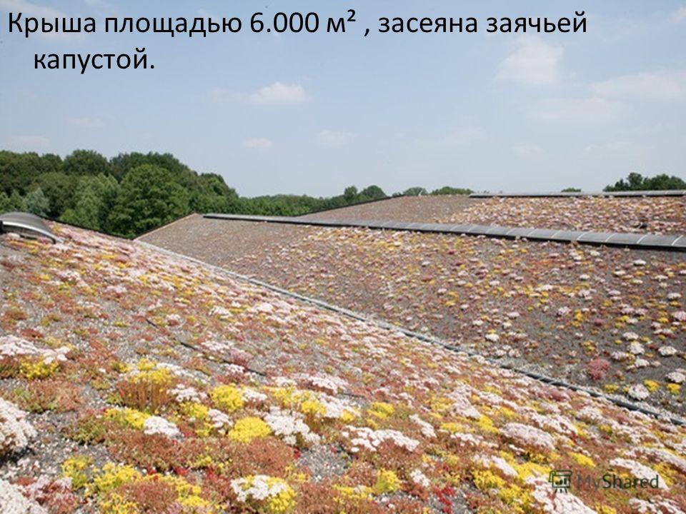 Крыша площадью 6.000 м², засеяна заячьей капустой.