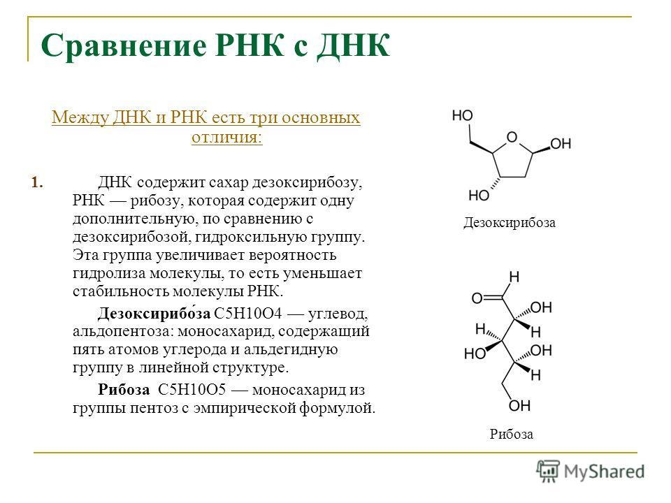 Сравнение РНК с ДНК Между ДНК и РНК есть три основных отличия: 1.ДНК содержит сахар дезоксирибозу, РНК рибозу, которая содержит одну дополнительную, по сравнению с дезоксирибозой, гидроксильную группу. Эта группа увеличивает вероятность гидролиза мол
