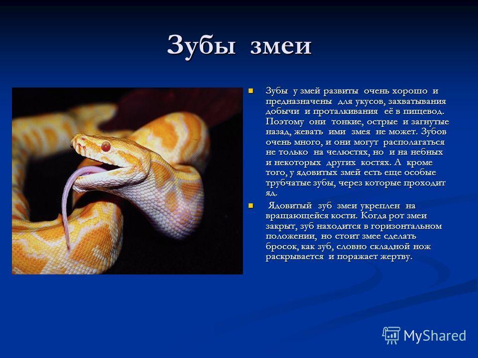 Зубы змеи Зубы у змей развиты очень хорошо и предназначены для укусов, захватывания добычи и проталкивания её в пищевод. Поэтому они тонкие, острые и загнутые назад, жевать ими змея не может. Зубов очень много, и они могут располагаться не только на
