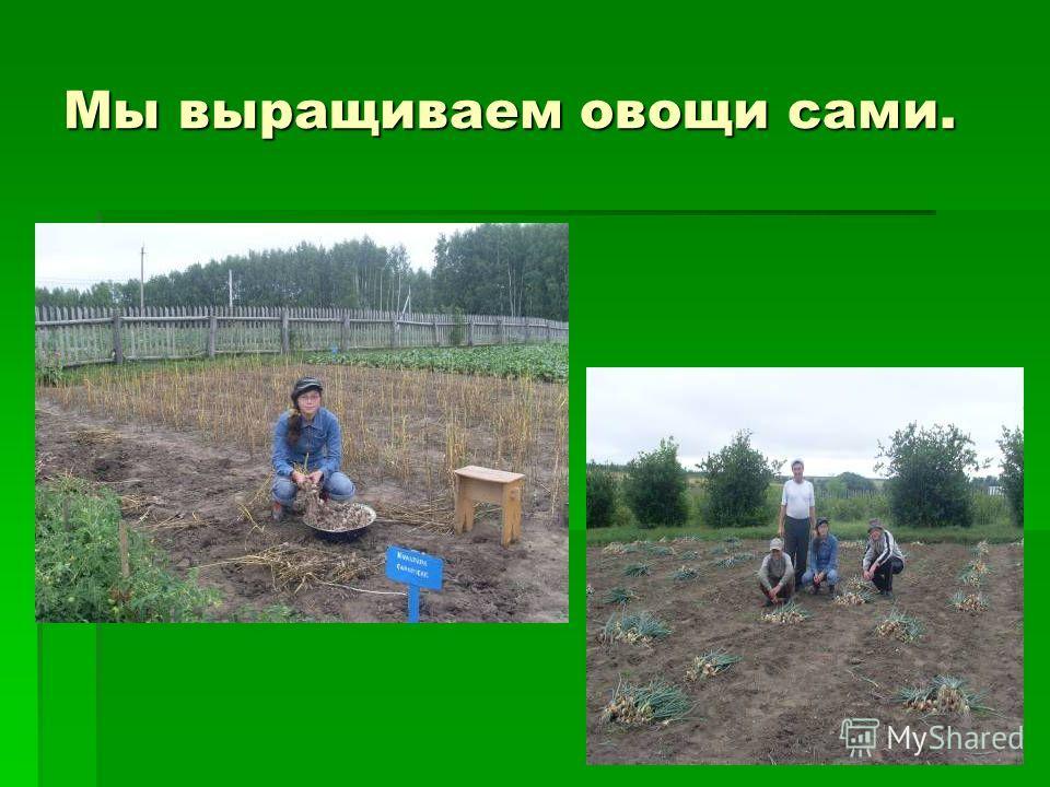 Мы выращиваем овощи сами.