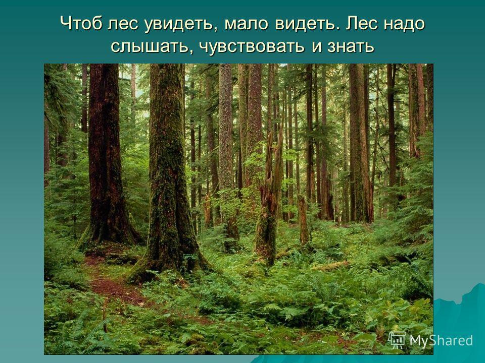 Чтоб лес увидеть, мало видеть. Лес надо слышать, чувствовать и знать