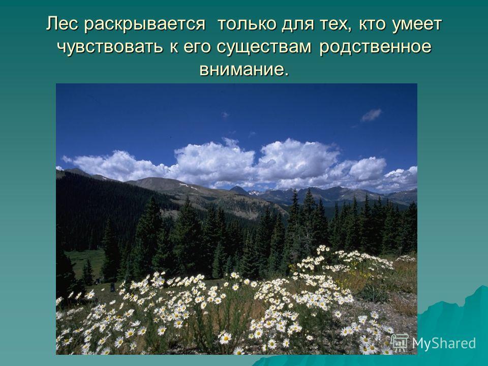 Лес раскрывается только для тех, кто умеет чувствовать к его существам родственное внимание.