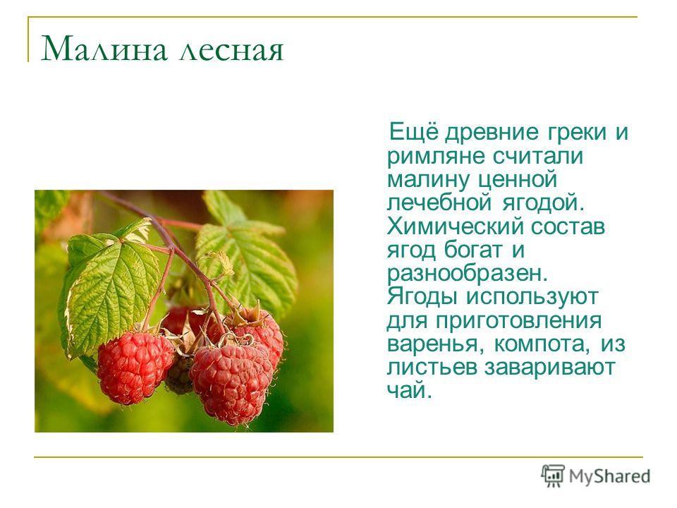 Малина лесная Ещё древние греки и римляне считали малину ценной лечебной ягодой. Химический состав ягод богат и разнообразен. Ягоды используют для приготовления варенья, компота, из листьев заваривают чай.