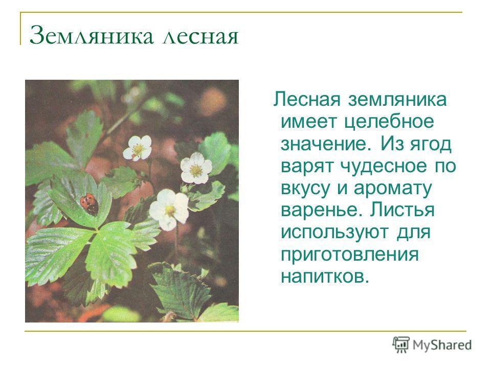 Земляника лесная Лесная земляника имеет целебное значение. Из ягод варят чудесное по вкусу и аромату варенье. Листья используют для приготовления напитков.