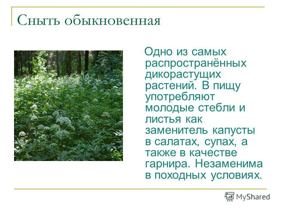 Сныть обыкновенная Одно из самых распространённых дикорастущих растений. В пищу употребляют молодые стебли и листья как заменитель капусты в салатах, супах, а также в качестве гарнира. Незаменима в походных условиях.