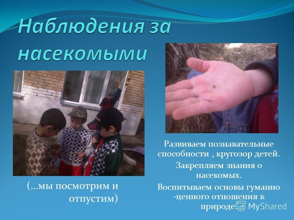 Развиваем познавательные способности, кругозор детей. Закрепляем знания о насекомых. Воспитываем основы гуманно -ценного отношения к природе.