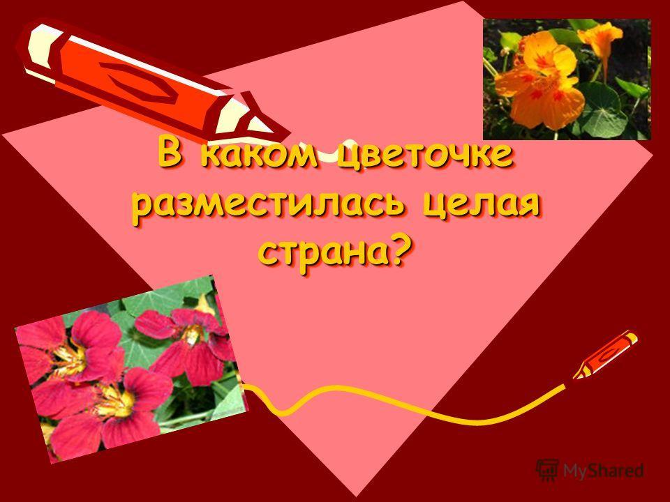 В каком цветочке разместилась целая страна?