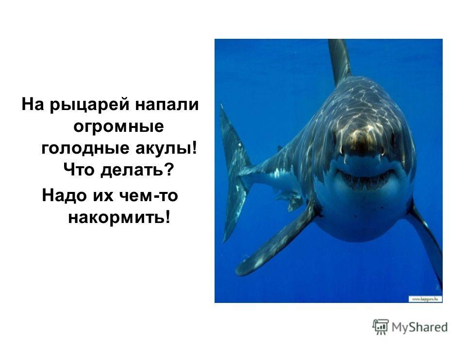 На рыцарей напали огромные голодные акулы! Что делать? Надо их чем-то накормить!