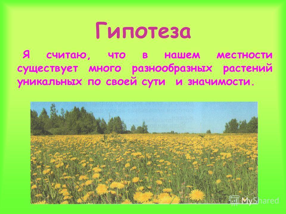 Гипотеза Я считаю, что в нашем местности существует много разнообразных растений уникальных по своей сути и значимости.