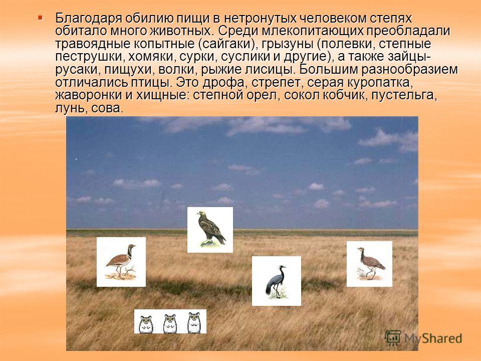 Благодаря обилию пищи в нетронутых человеком степях обитало много животных. Среди млекопитающих преобладали травоядные копытные (сайгаки), грызуны (полевки, степные пеструшки, хомяки, сурки, суслики и другие), а также зайцы- русаки, пищухи, волки, ры