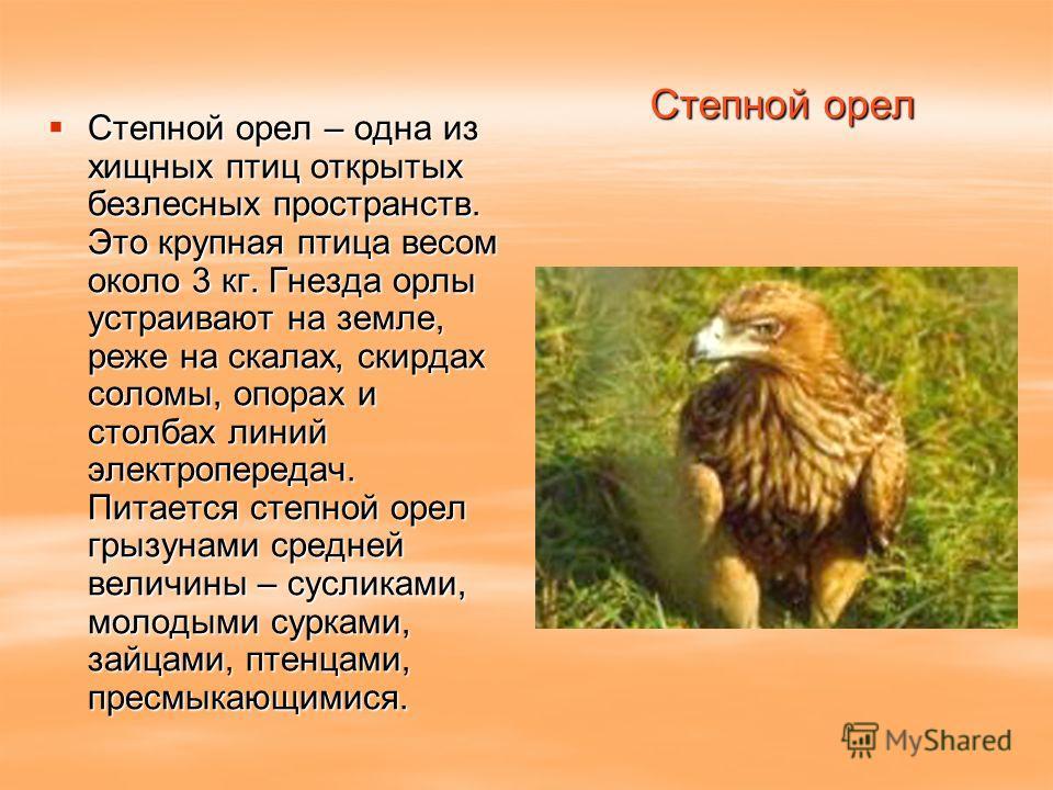 Степной орел Степной орел – одна из хищных птиц открытых безлесных пространств. Это крупная птица весом около 3 кг. Гнезда орлы устраивают на земле, реже на скалах, скирдах соломы, опорах и столбах линий электропередач. Питается степной орел грызунам