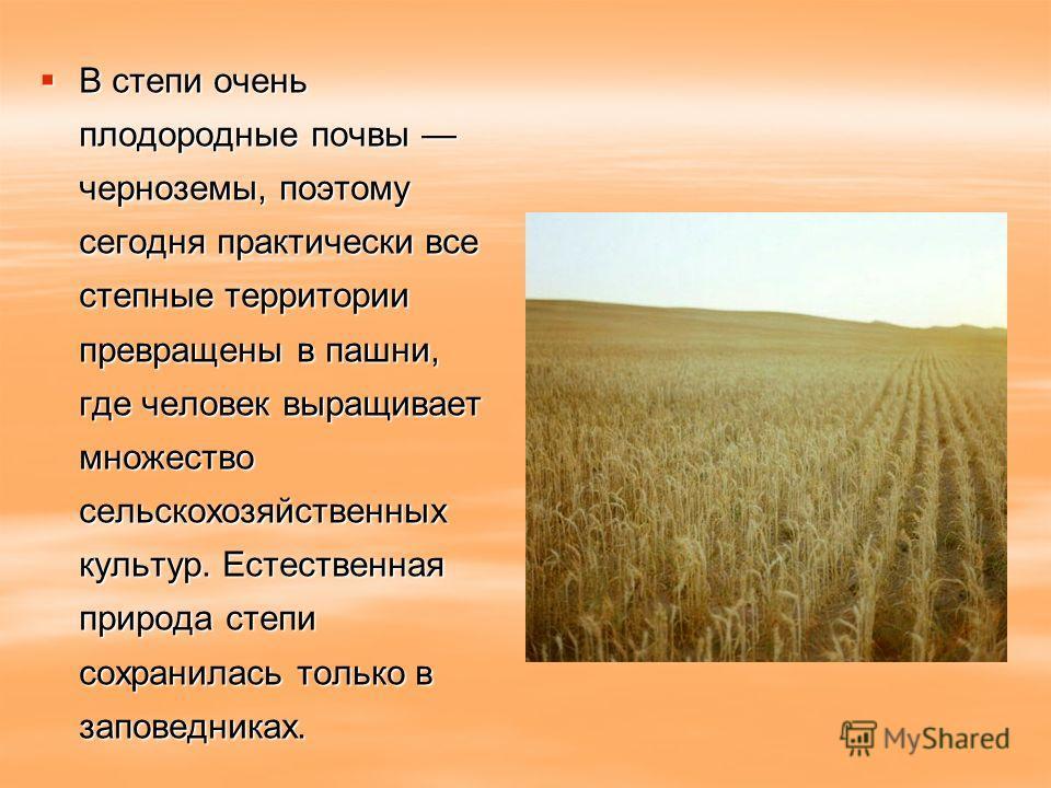 В степи очень плодородные почвы черноземы, поэтому сегодня практически все степные территории превращены в пашни, где человек выращивает множество сельскохозяйственных культур. Естественная природа степи сохранилась только в заповедниках. В степи оче