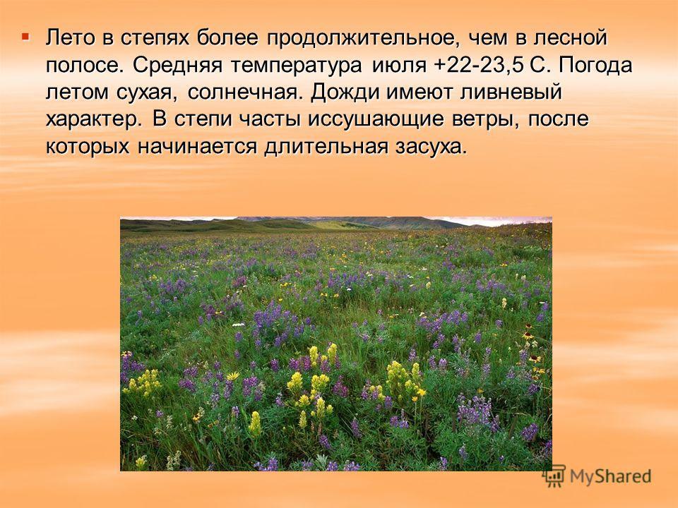 Лето в степях более продолжительное, чем в лесной полосе. Средняя температура июля +22-23,5 C. Погода летом сухая, солнечная. Дожди имеют ливневый характер. В степи часты иссушающие ветры, после которых начинается длительная засуха. Лето в степях бол