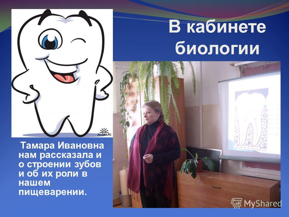 В кабинете биологии Тамара Ивановна нам рассказала и о строении зубов и об их роли в нашем пищеварении.