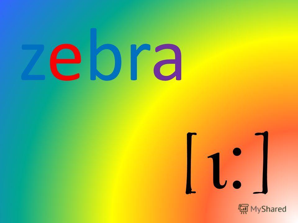 zebra [ι ׃ ]