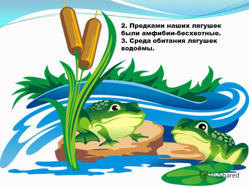 2. Предками наших лягушек были амфибии-бесхвотные. 3. Среда обитания лягушек водоёмы.