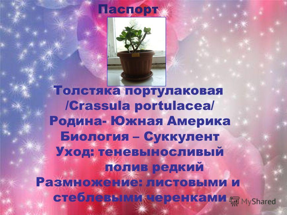 Паспорт Толстяка портулаковая /Crassula portulacea/ Родина- Южная Америка Биология – Суккулент Уход: теневыносливый полив редкий Размножение: листовыми и стеблевыми черенками