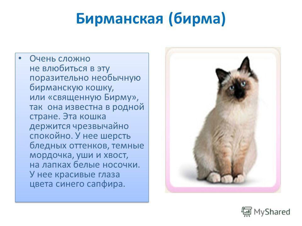 Бирманская (бирма) Очень сложно не влюбиться в эту поразительно необычную бирманскую кошку, или «священную Бирму», так она известна в родной стране. Эта кошка держится чрезвычайно спокойно. У нее шерсть бледных оттенков, темные мордочка, уши и хвост,