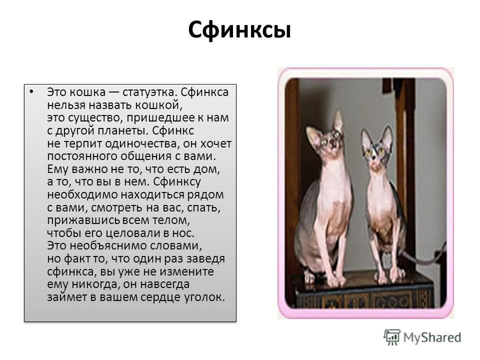 Сфинксы Это кошка статуэтка. Сфинкса нельзя назвать кошкой, это существо, пришедшее к нам с другой планеты. Сфинкс не терпит одиночества, он хочет постоянного общения с вами. Ему важно не то, что есть дом, а то, что вы в нем. Сфинксу необходимо наход