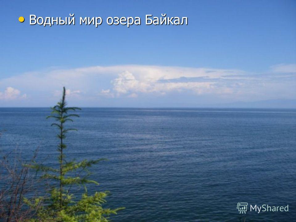 Водный мир озера Байкал Водный мир озера Байкал
