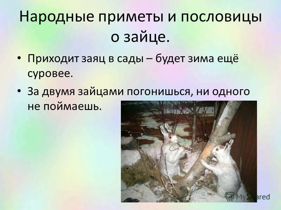 Народные приметы и пословицы о зайце. Приходит заяц в сады – будет зима ещё суровее. За двумя зайцами погонишься, ни одного не поймаешь.