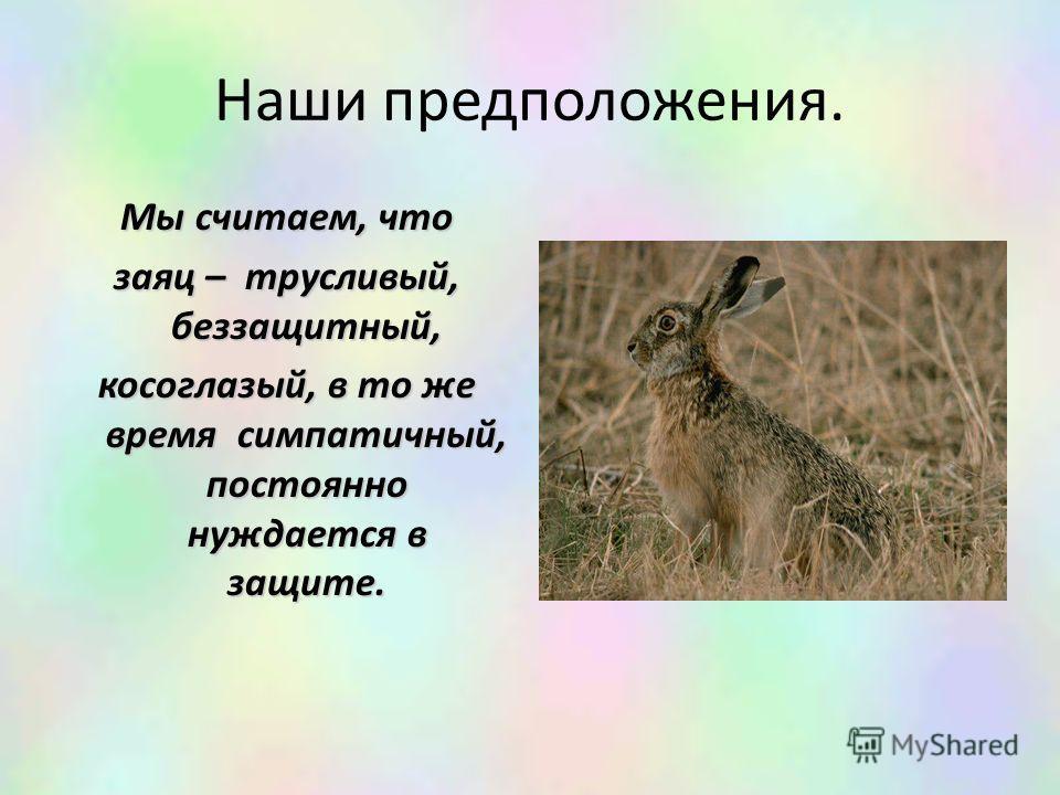 Наши предположения. Мы считаем, что заяц – трусливый, беззащитный, косоглазый, в то же время симпатичный, постоянно нуждается в защите.