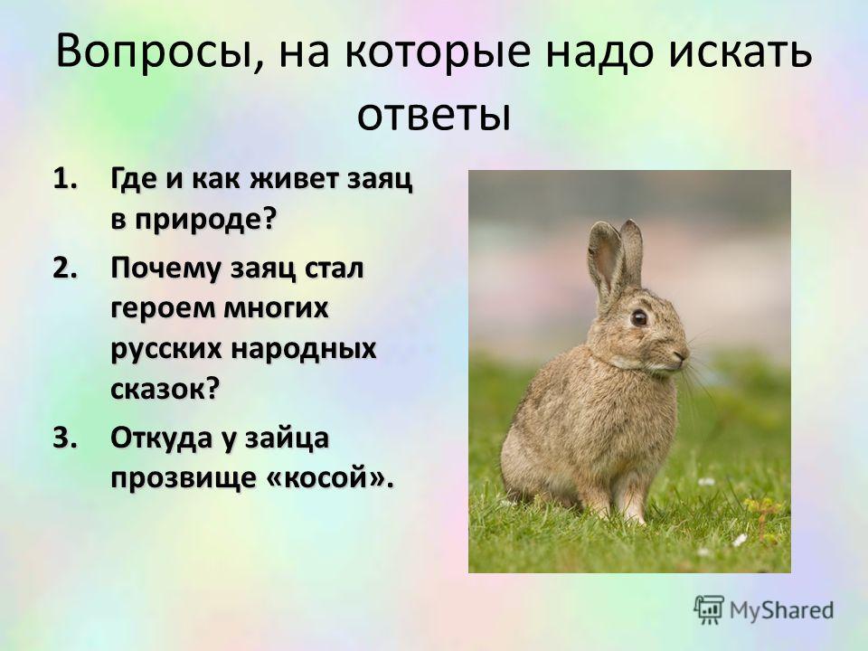 Вопросы, на которые надо искать ответы 1.Где и как живет заяц в природе? 2.Почему заяц стал героем многих русских народных сказок? 3.Откуда у зайца прозвище «косой».