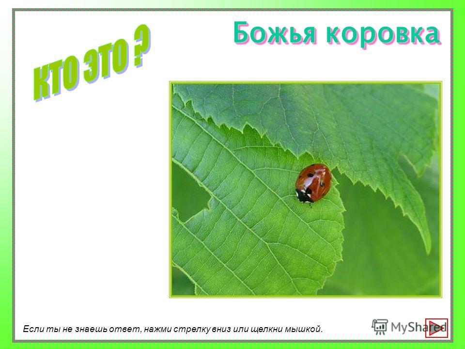 А если ты увидишь насекомое, сможешь ли ты его узнать? Давай проверим?