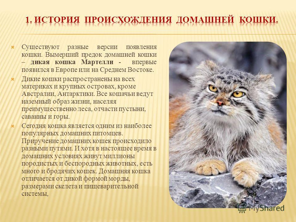 Существуют разные версии появления кошки. Вымерший предок домашней кошки – дикая кошка Мартелли - впервые появился в Европе или на Среднем Востоке. Дикие кошки распространены на всех материках и крупных островах, кроме Австралии, Антарктики. Все коша