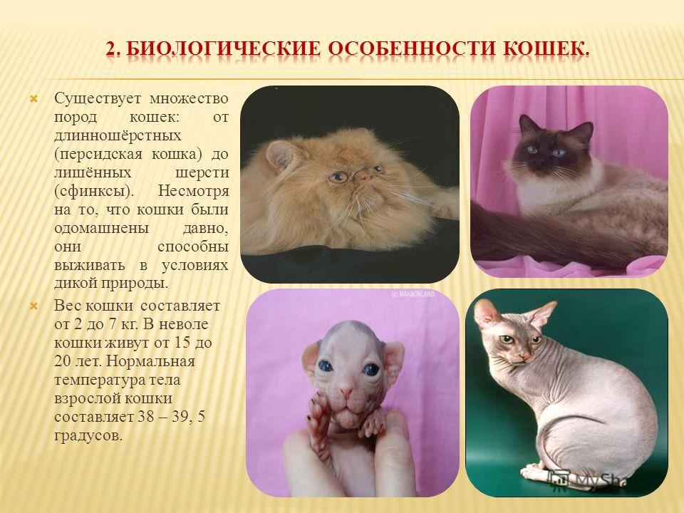 Существует множество пород кошек: от длинношёрстных (персидская кошка) до лишённых шерсти (сфинксы). Несмотря на то, что кошки были одомашнены давно, они способны выживать в условиях дикой природы. Вес кошки составляет от 2 до 7 кг. В неволе кошки жи
