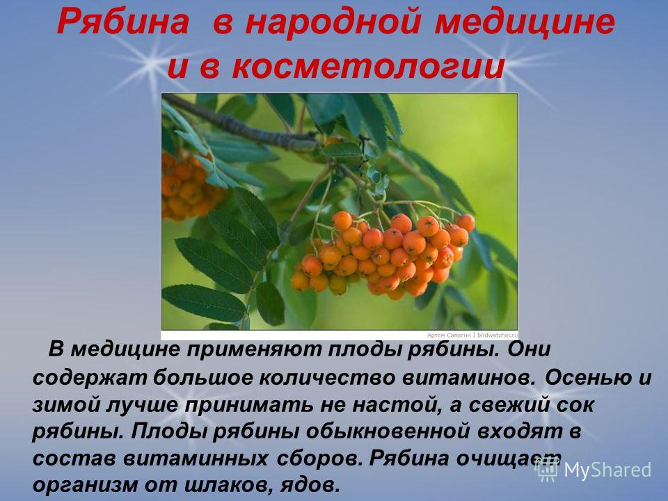 Рябина в народной медицине и в косметологии В медицине применяют плоды рябины. Они содержат большое количество витаминов. Осенью и зимой лучше принимать не настой, а свежий сок рябины. Плоды рябины обыкновенной входят в состав витаминных сборов. Ряби