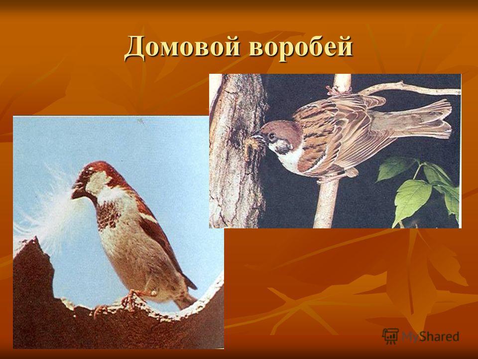Птичка – невеличка, Птичка – невеличка, ножки имеет, а ходить не умеет, Хочет сделать шажок, Хочет сделать шажок, получается прыжок. получается прыжок.