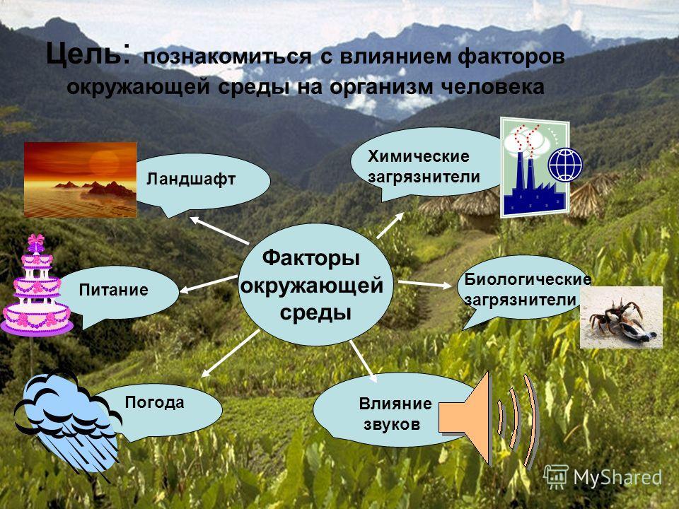 Цель : познакомиться с влиянием факторов окружающей среды на организм человека Факторы окружающей среды Химические загрязнители Биологические загрязнители Питание Погода Питание Влияние звуков Ландшафт